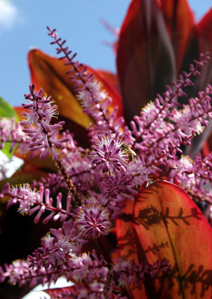 Bee's World -- Ti-plant blossoms drip with nectar~<br /> <br /> Flower blossoms are a year-around thing in the tropics :)