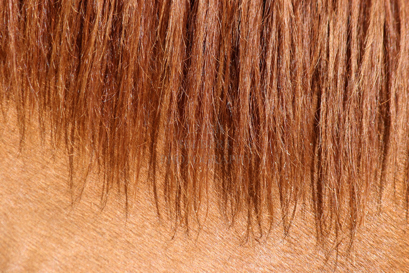 Kapoho Horse mane, Island of Hawaii #2<br /> <br /> IMG#8616