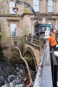 18 ILF Feb Tree removal 0002