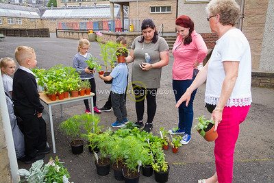 17 ILF June St Margarets Garden 0003