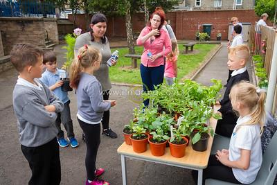 17 ILF June St Margarets Garden 0001
