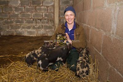 17 ILF Mar Shankend Pigs 0002