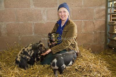 17 ILF Mar Shankend Pigs 0015