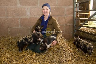 17 ILF Mar Shankend Pigs 0016