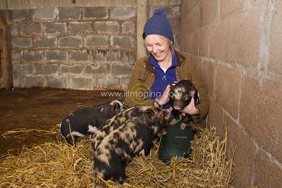 17 ILF Mar Shankend Pigs 0001