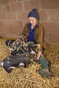17 ILF Mar Shankend Pigs 0009