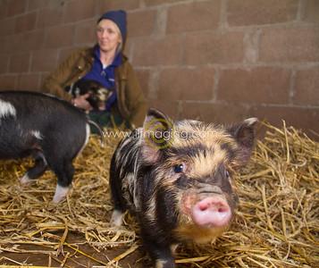 17 ILF Mar Shankend Pigs 0005