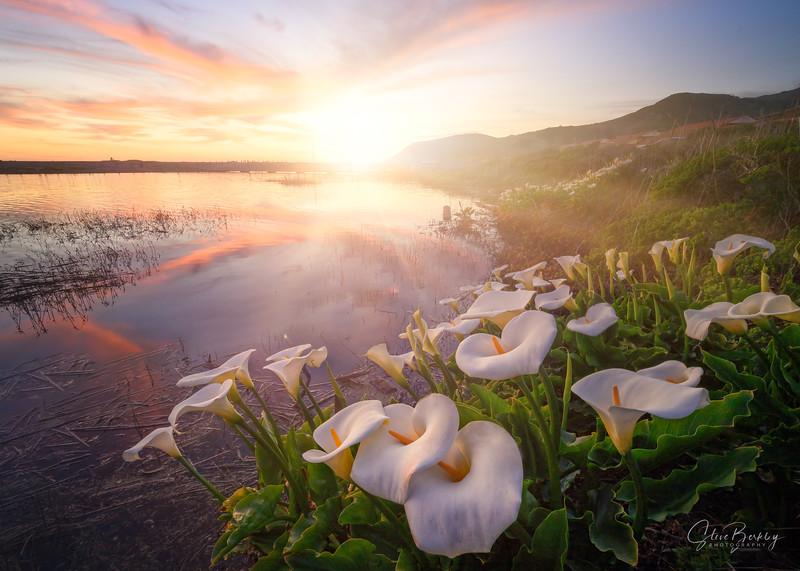 Lagoon Callas II