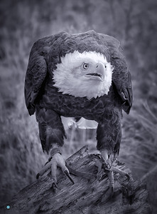 Hawk Quest 2016