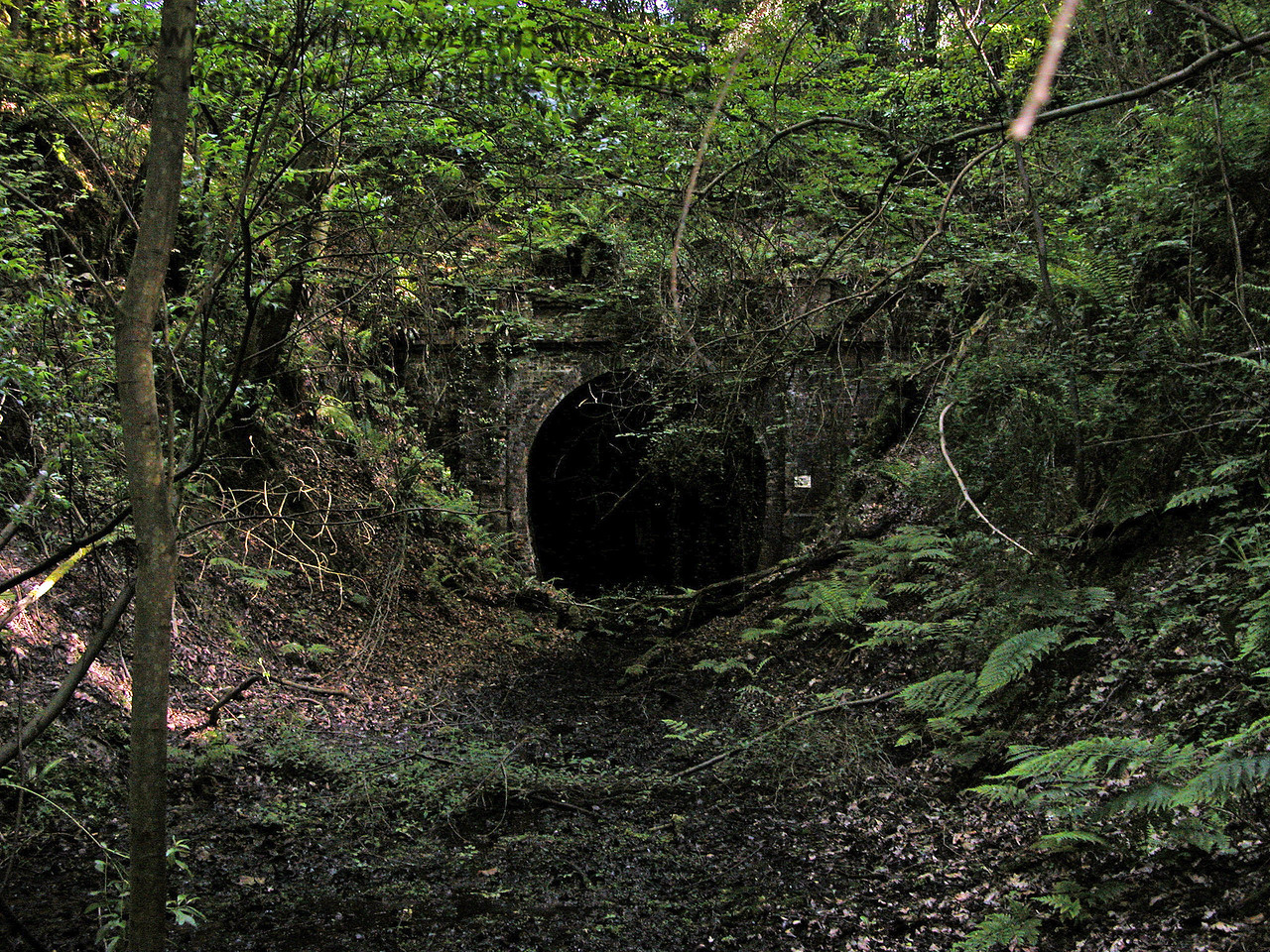 The northern portal of the abandoned Badgers Oak Tunnel.  The.tunnel is only of sufficient bore for a single track and curves slightly at the southern end.   31.05.2004.   At the time of the visit this was a dangerous environment and a hard hat area.  Visitors needed to be suitably equipped. There were overhanging and unstable trees, the ground was covered by a deep sludge, and the tunnel was waterlogged.  It was unsafe to enter.