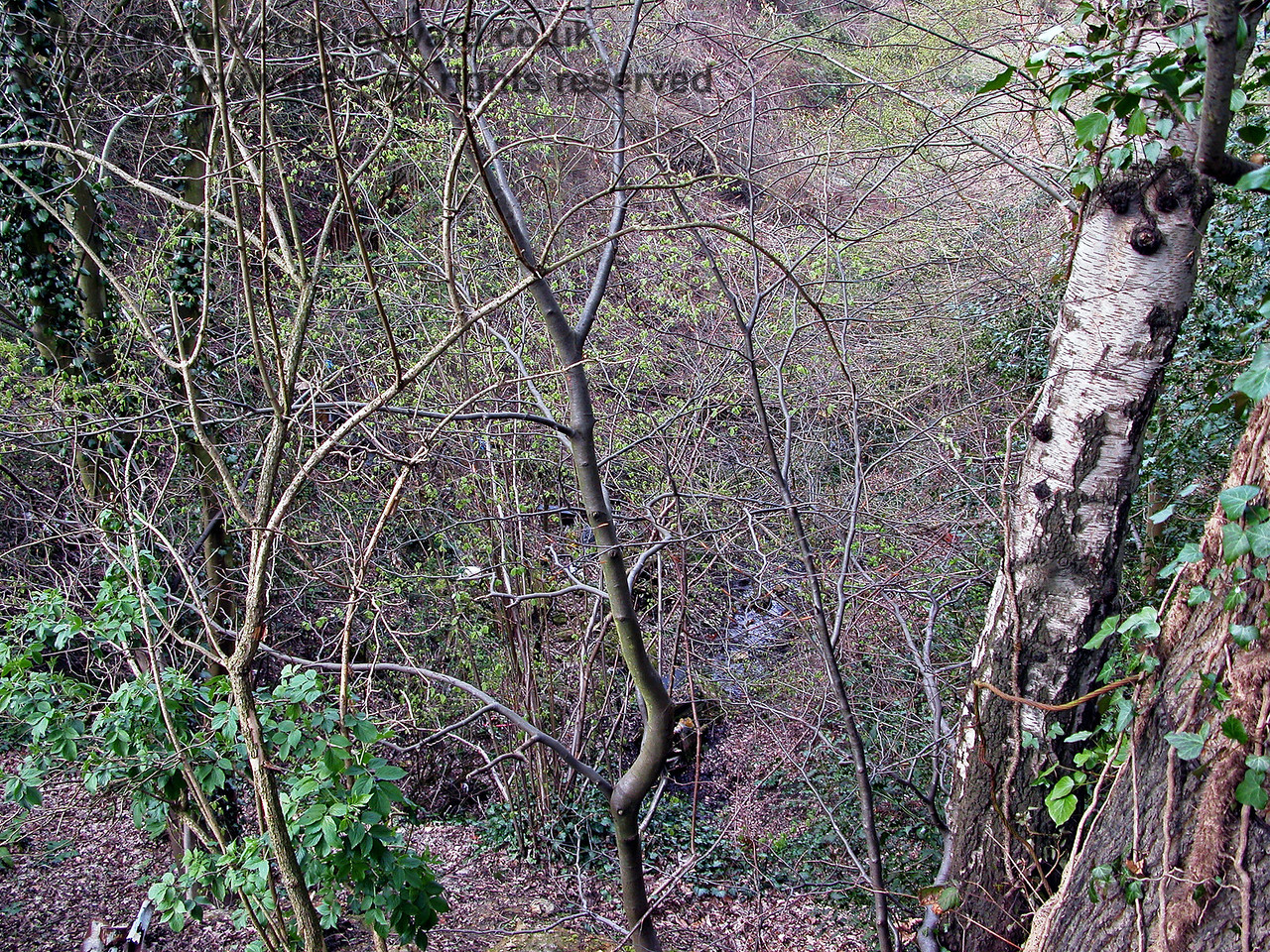 Looking down into the northern cutting leading towards Horsmonden Tunnel from above the tunnel portal.  12.04.2004