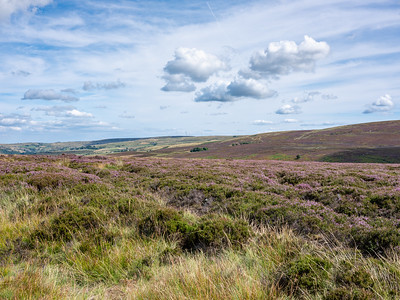 Stanbury Moor at Flaight Hill