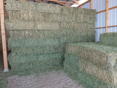 2nd Cutting alfalfa/orchard 2010