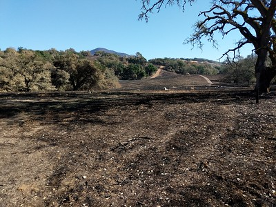 Hayfield After the fire