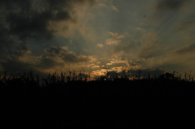 Sunset Over the Cornfield - 2