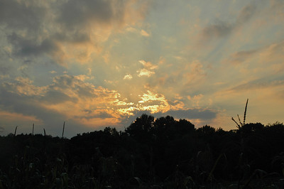Sunset Over the Cornfield - 1