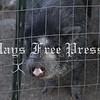 Photos of barnyard animals at Ma's Mini-Pigs & Farm animal