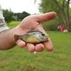 Buda Fun Fish at Bradfield Park