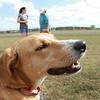 Dog photos for Echo