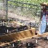 PAWS in Kyle doggone green garden opening