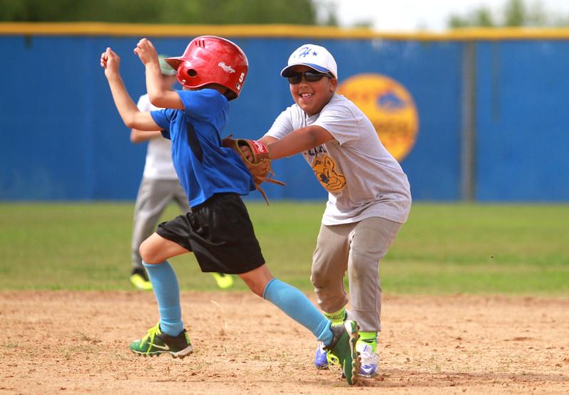 Lehman lobo baseball camp