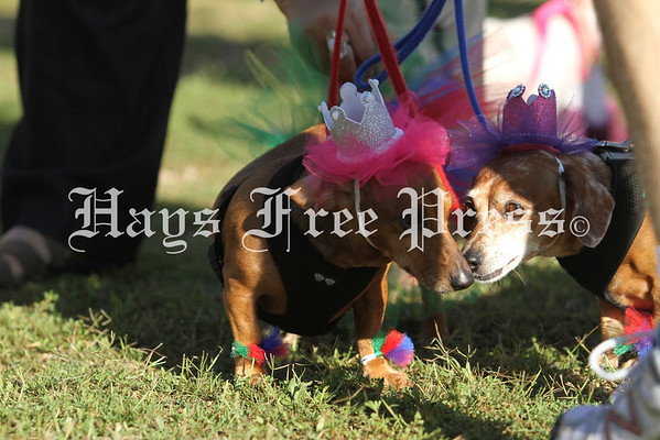 The 2016 Buda Wiener Dog Festival and Races