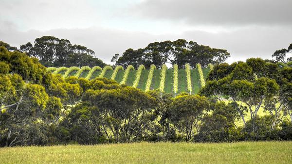 Vines curving (1)