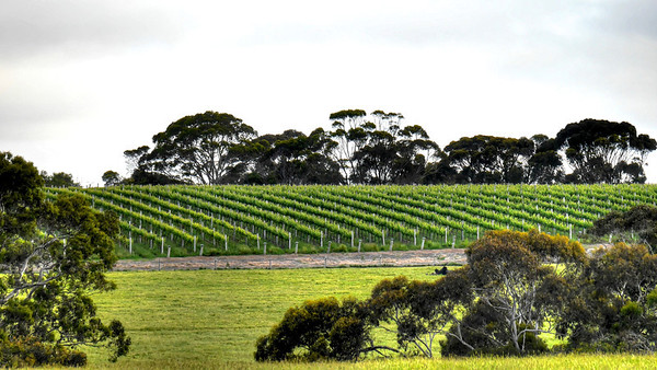 Vines full (1)