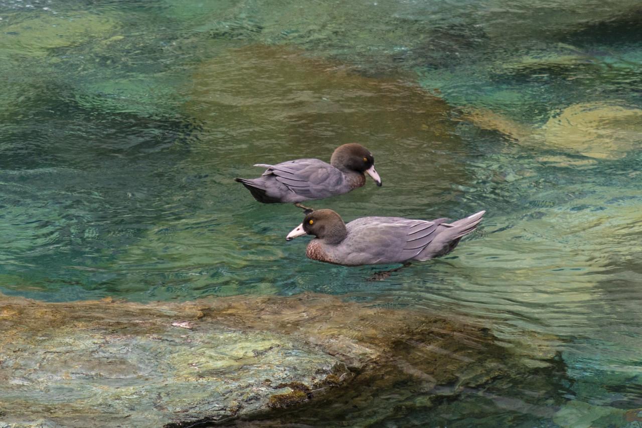 OTMC Five Pass Trip 2018 - Fohn Lakes to Hidden Falls Creek