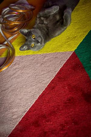 Isaac Mell Cats