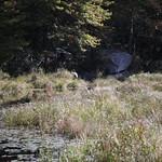 Heads Pond -Hooksett NH - Great Blue Heron 09212019 19