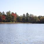 Heads Pond -Hooksett NH - Great Blue Heron 09212019 30