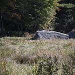 Heads Pond -Hooksett NH - Great Blue Heron 09212019 12