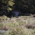 Heads Pond -Hooksett NH - Great Blue Heron 09212019 18