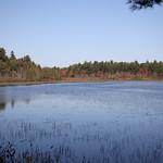 Heads Pond -Hooksett NH - Great Blue Heron 09212019 34