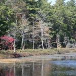 Heads Pond -Hooksett NH - Great Blue Heron 09212019 33