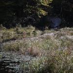 Heads Pond -Hooksett NH - Great Blue Heron 09212019 23