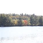 Heads Pond -Hooksett NH - Great Blue Heron 09212019 32