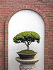 Bonzai Tree with wall