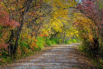 Katy Trail Fall IMG_3685 26.7x40in 300dpi