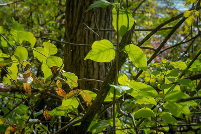 Green Green-03668-26pt7x40in 300dpi