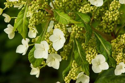 Blossoms at Longview Park