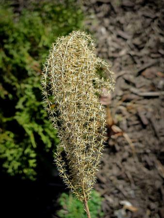 Grass1-1390-30x40in 300dpi