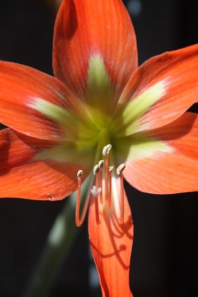 Gramma Hill's Flower
