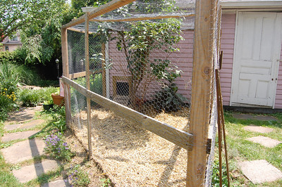 Kay's Chicken Enclosure
