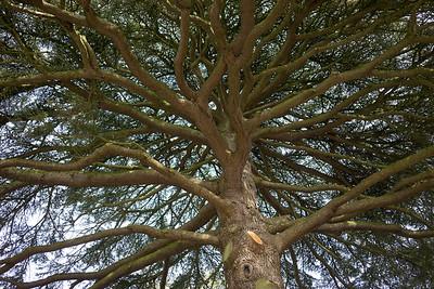 Spetchley Park Gardens-8