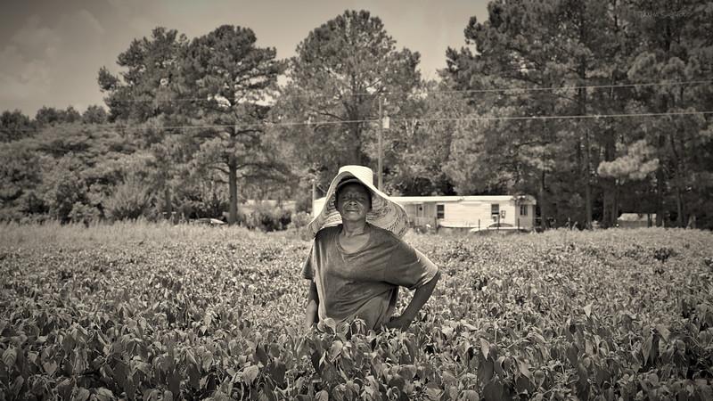 woman in a pepper field