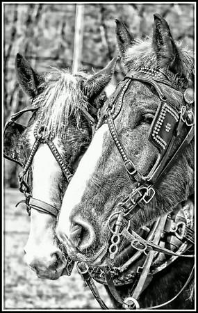 Hearts and Bones Farm-Horses