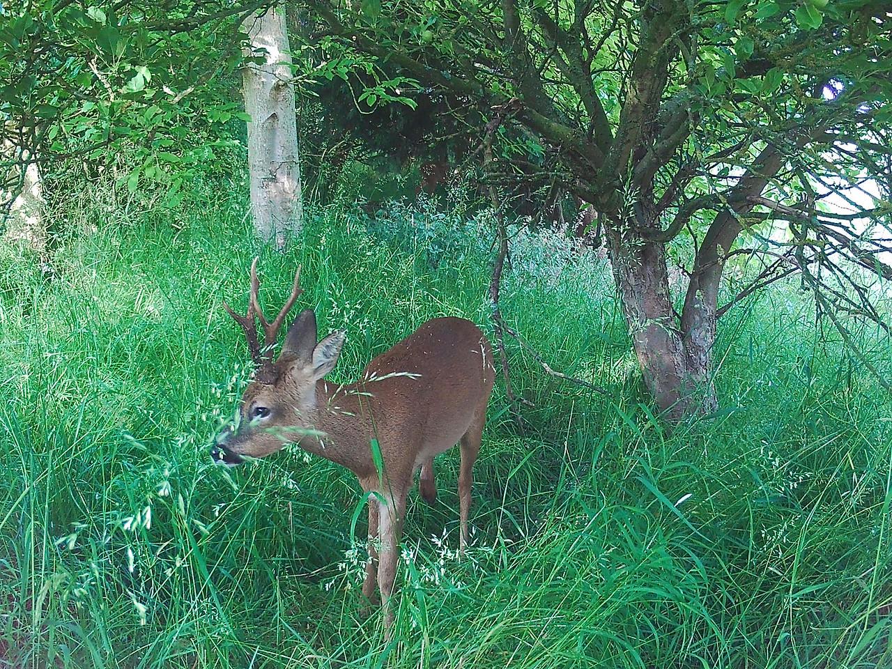 Heath Farm 2015-07-02 at 06-42-32
