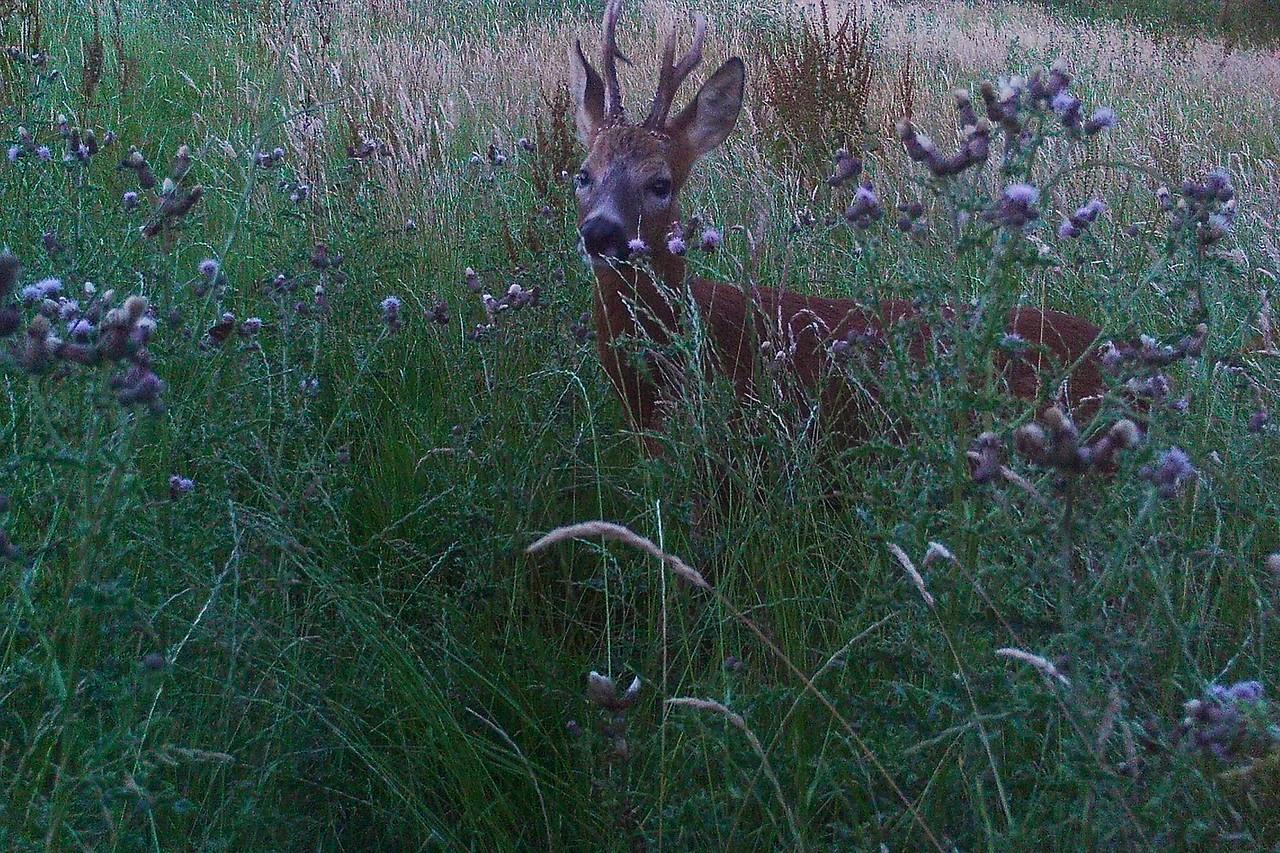 Heath Farm 2015-07-22 at 21-29-22